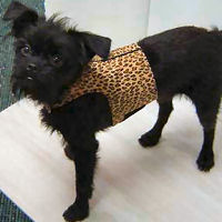 bailey_otis ultrasuede bailey jacket for small dogs by susan lanci designs from