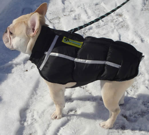Chillybuddy Winter Jacket For Small Dogs From Golly Gear