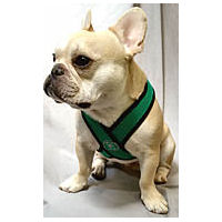 Gooby Comfort Harness for Small Dogs from Golly Gear