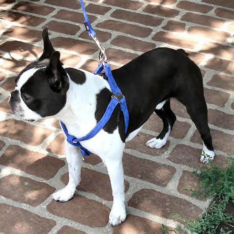 Microfiber Step-in Harness for Small Dogs from Golly Gear