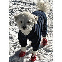 Pawz Disposable Dog Boots for Small Dogs from Golly Gear 7515eb3ab2e5