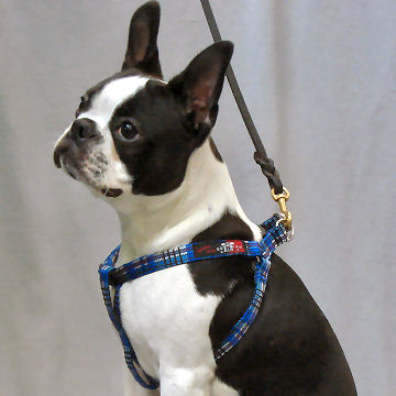 Plaid Step-in Harness for Small Dogs by Daba Doo from Golly Gear