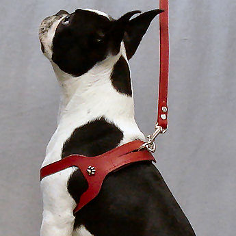 choke free shoulder collar harness for small dogs