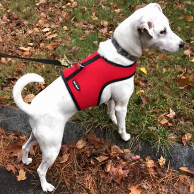 Wrap-N-Go Harness for Small Dogs by Bark Appeal