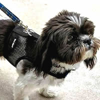The Wrap-N-Go Harness is the best harness for dogs who escape