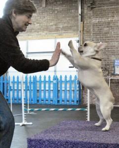 Dog training includes tricks.
