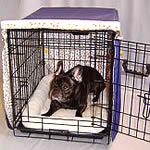 French Bulldog crate training