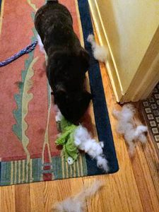 It was much more pleasant to clean up the murdered stuffie toy.