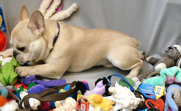 Teddy and pile of toys