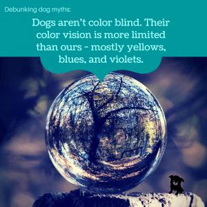 dog vision myth