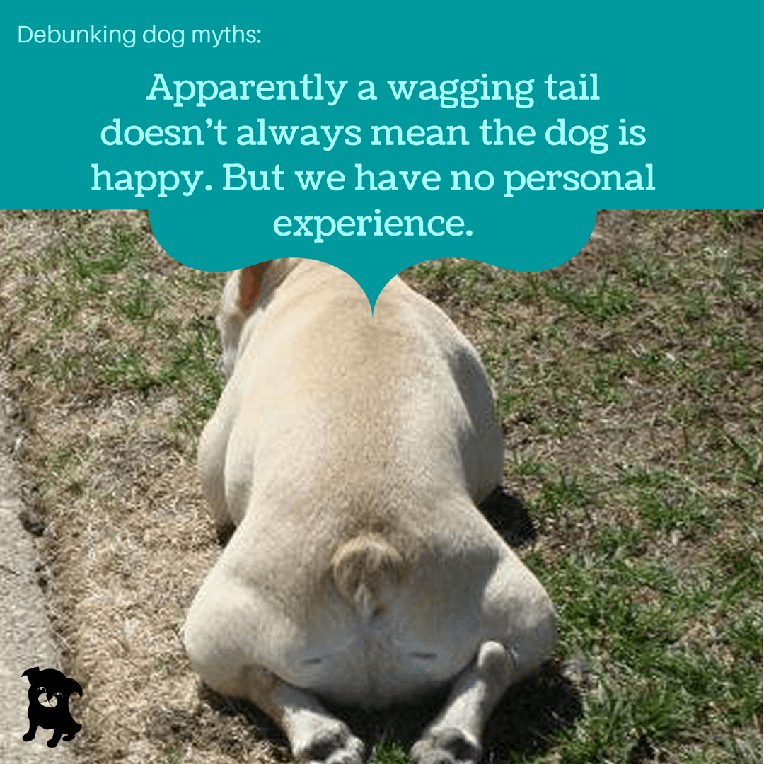 What Does It Mean When A Dog S Tail Is Up