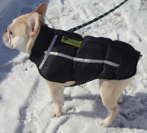 Teddy in his Chillybuddy Winter Jacket