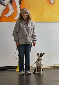 Handler and Boston Terrier in obedience class