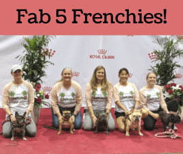 5 dog people holding french bulldogs