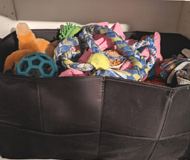 Bin of clean dog toys
