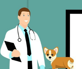 Internet vet advice is no substitute for a veterinarian