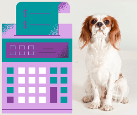 Picture of a dog next to a calculator, illustrating budgeting for a dog
