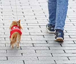 Picture of a brave little dog in a red sweater next to a person's jeans-clad legs and sneakers.