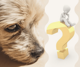Illustration of dog questions