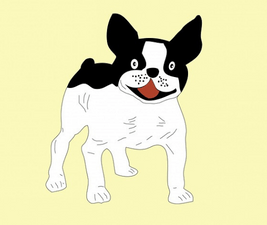 Image of an eager white and black French Bulldog illustrating a dog who doesn't cuddle.