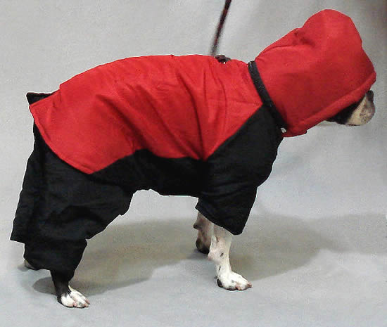 Snowsuit For Small Dogs By Casual Canine