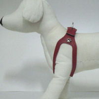 Choke Collar For Dogs How To Put On