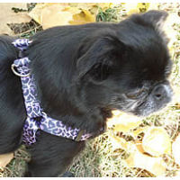 Yellow-Dog-Design-Step-in-Harness